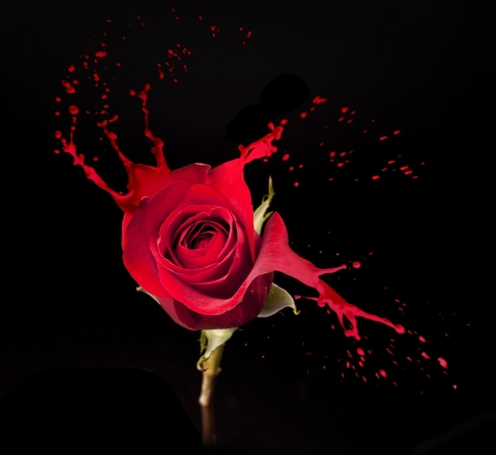 paints: red rose with red splashes on black background