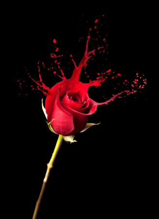 single red rose: red rose with red splashes on black background