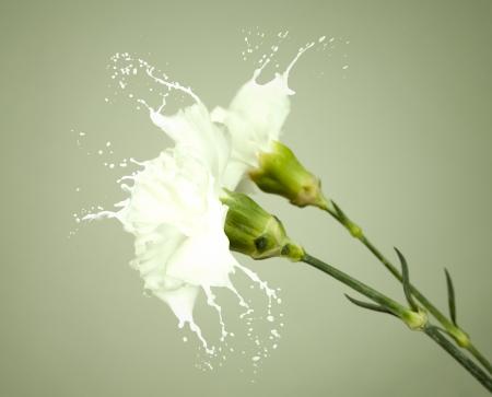 white flowers with milk splash on green background