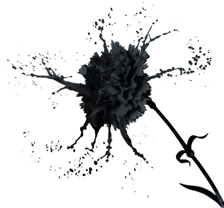 black carnation on white isolated background with paint splash photo