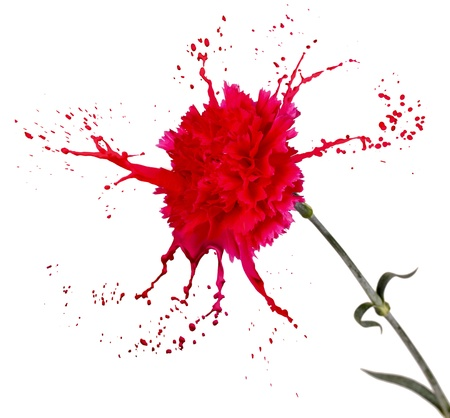 red carnation on white isolated background with paint splash Stock Photo - 16791813