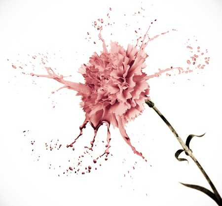 pink carnation on white isolated background with paint splash
