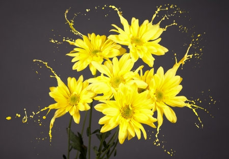 yellow flowers on grey background with paint splashes Stock Photo - 16791825