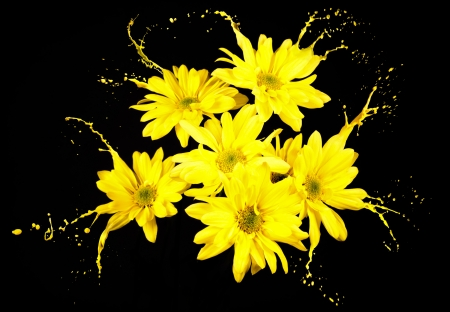 yellow flowers on black background with paint splashes Stock Photo - 16791824