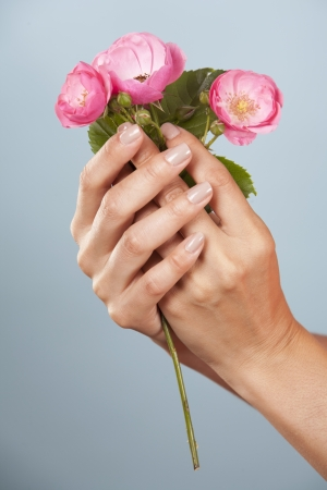 hands holding pink roses on blue background photo