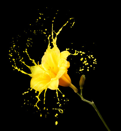 color paint: bright flower with yellow splashes on black background Stock Photo