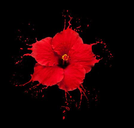 flor brillante con manchas rojas sobre fondo negro Foto de archivo