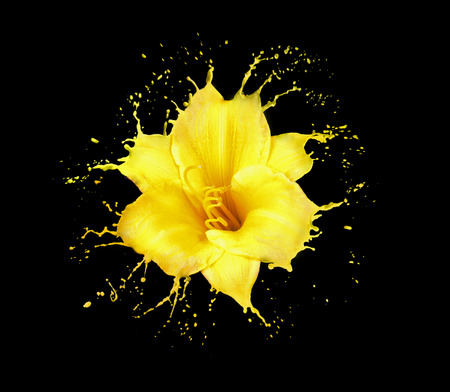 bright flower with yellow splashes on black background Imagens