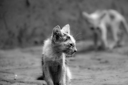 frail: Hungry Kitten