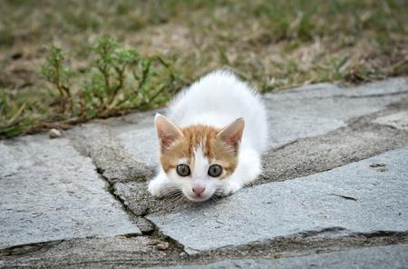 rape: Gatito acostado en el patio trasero Foto de archivo