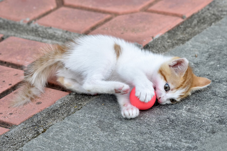 domestic: Kitten playing with the red small ball in the backyard