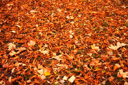 Fallen autumn leaves on the ground. Beautiful autumn colors.