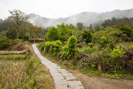telegraph hill: Greenery rural road.