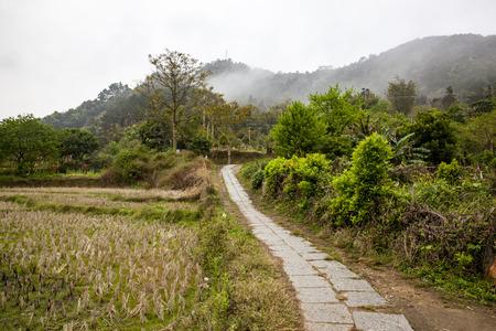 telegraph hill: village rural road.