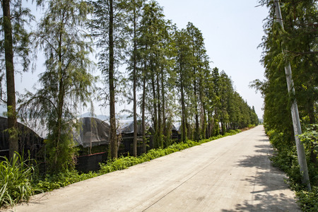 Landscape view of a road with trees growing along side