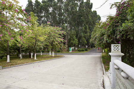 Avenue and Background.