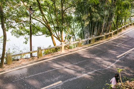 riverside trees: Roadside scenery