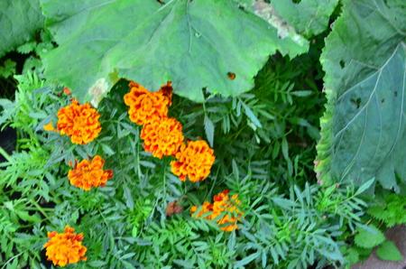 小さなオレンジ色の花 写真素材