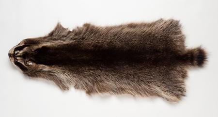 animal fur: Skin beaver isolated on white background