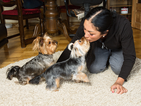 breeder: Pets. Close up  portrait of a woman - yorkshire terrier breeder kissing with dogs