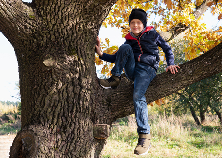 Cute little boy sitting on branch of tree on sunny autumn day
