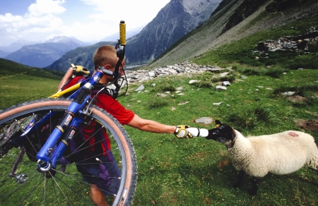 mountainbiking: CHAMONIX, FRANCE - AUGUST 20: Mountainbiker Thomas Jorgensen feeding a sheep water from his bottle on a ride around the Mt Blanc in France on 20. August 1999. The trail is popular for mountain hikers.