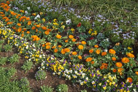 flower bed: Spring flower bed Stock Photo