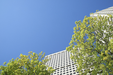 summer trees: High rise buildings and green