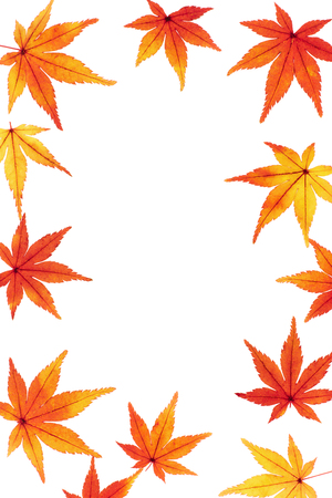 Frame of autumn leaves Maple