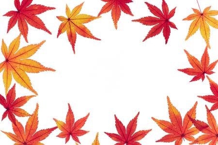 Frame of autumn leaves Maple