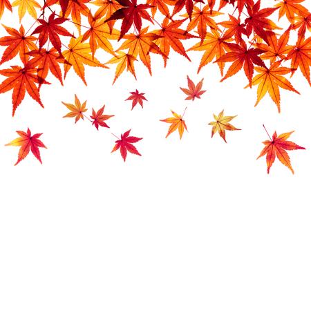 Falling Maple leaves Autumn image