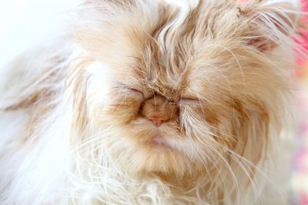 Wet cat with closed eyes photo