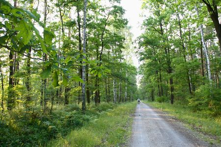 backwoods: road in deep forest