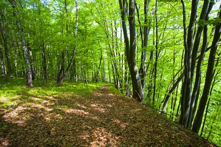 Mountains scenery. Bieszczady National Park, Poland, Europe