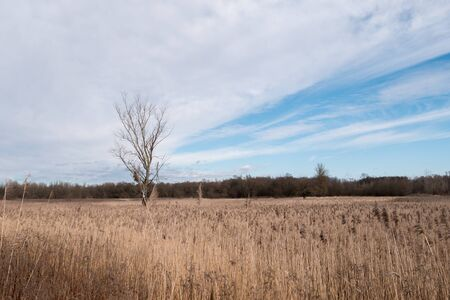 Reed grass and a tree stands against a blue-white sky. Loot of reed grass in a fied. Main subject is tree. Stok Fotoğraf