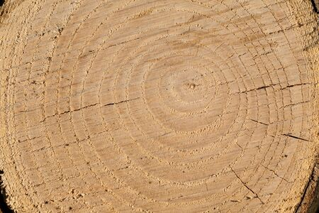The cross section of the tree years. Cross section of trunks with visible brown years, as round rings. Rough and cracked surface due to the way the trunk is cut. Banque d'images