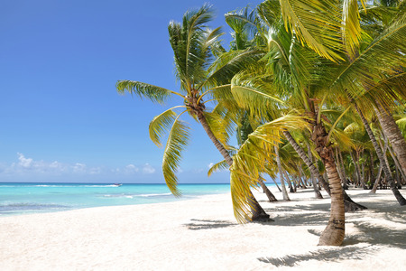 coconut trees: Palm trees and tropical beach on a desert island