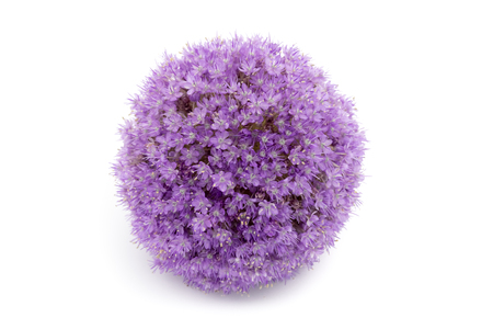 allium flower: Purple allium flower iolated on white background Stock Photo