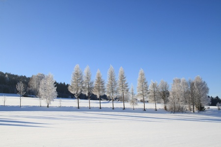 White Tree Line Winter Wonderland photo