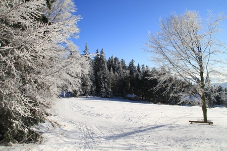 Winter wonderland in the woods photo