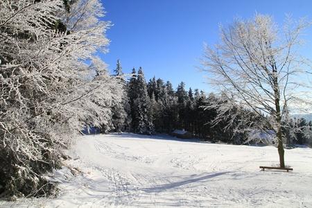 Winter wonderland in the woods Stock Photo - 9455374