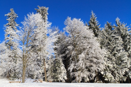 White Winter Wonderland in the woods Stock Photo - 9455376