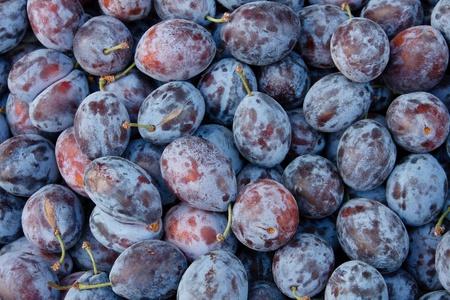 Tasty organic plums at local market photo