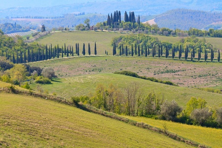Typical Tuscan Landscape with tree lines, Italy Stock Photo - 9569834
