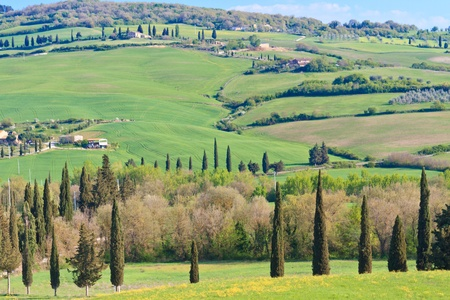 Typical Tuscan Landscape with tree lines and farmhouses, Italy Stock Photo - 9569823