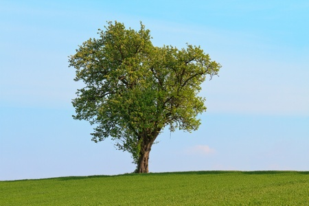 Single tree before blue sky and green meadow Stock Photo - 9569810