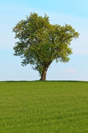 Single tree before blue sky and green meadow Stock Photo - 9569830