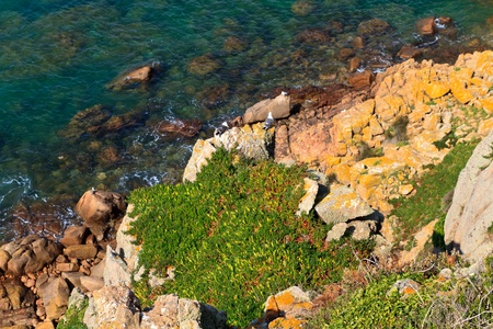 Picturesque rocky coast, Jersey, Channel Islands photo