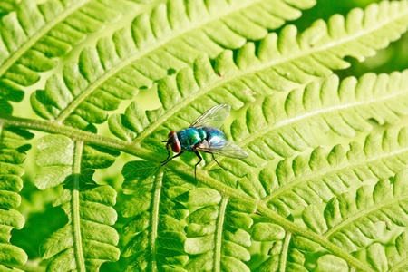 Colorful fly on green leaf (macro) Stock Photo - 11392914