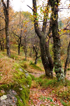 Enchanted Scottish Forest in autumn (Trossachs National Park) Stock Photo - 12062391